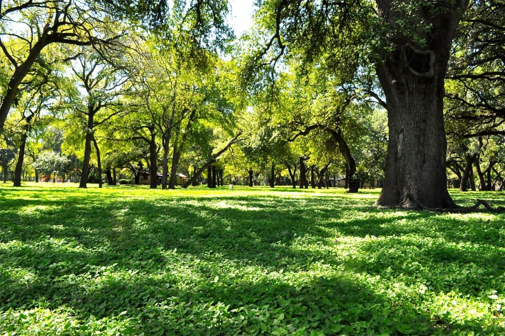 a park with lots of green trees