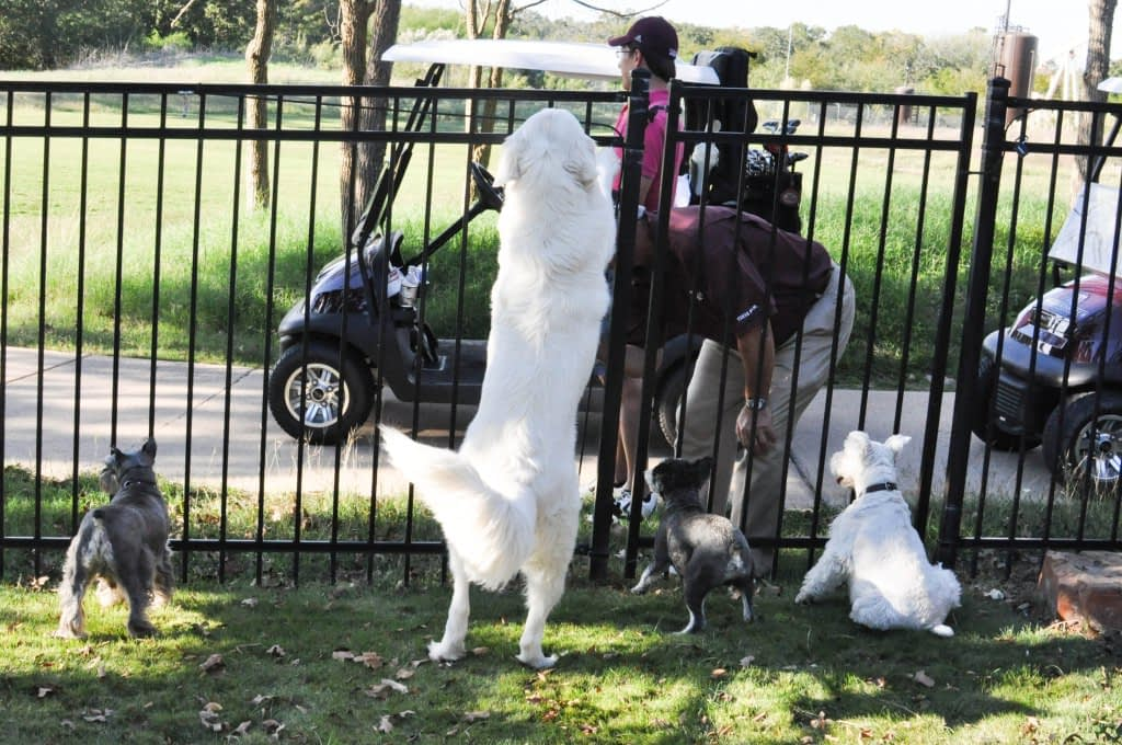 dogs jumping on the fence
