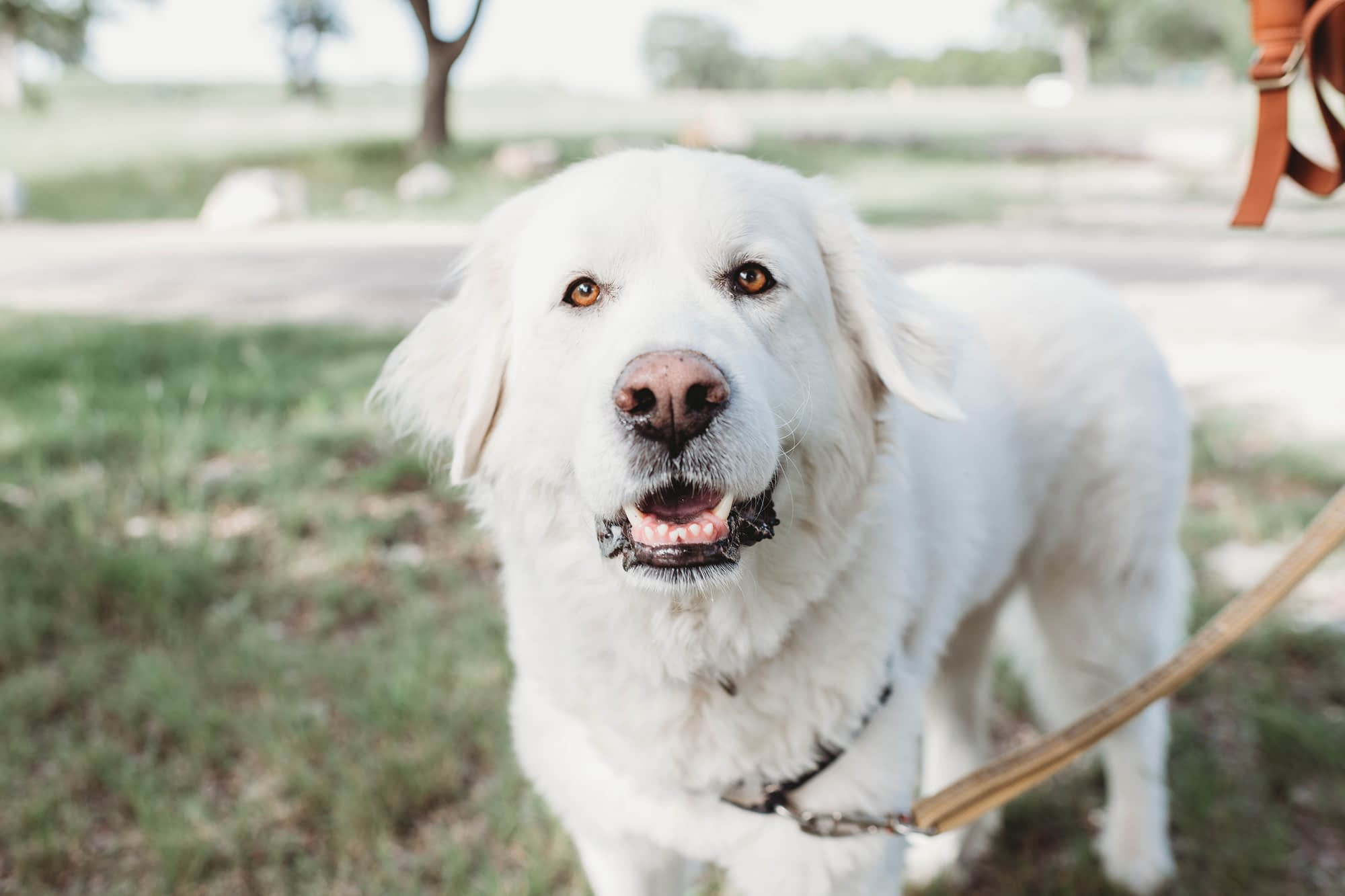 How to find the healthiest dog food large white dog
