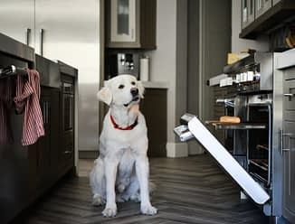 a large white dog in a kitchen staring at an open oven with a hotdog bun in it