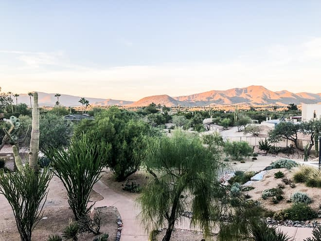 the dessert shrubbery with mountains in the distance in phoenix